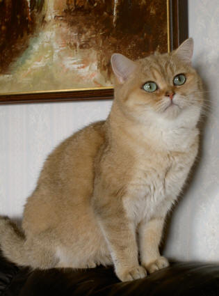 Image of Litho's Savanna